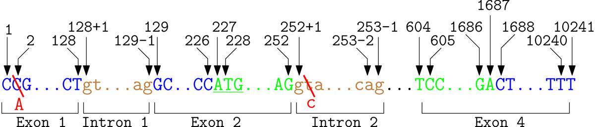 https://static-content.springer.com/image/art%3A10.1186%2F1471-2105-12-S4-S4/MediaObjects/12859_2011_Article_4614_Fig3_HTML.jpg