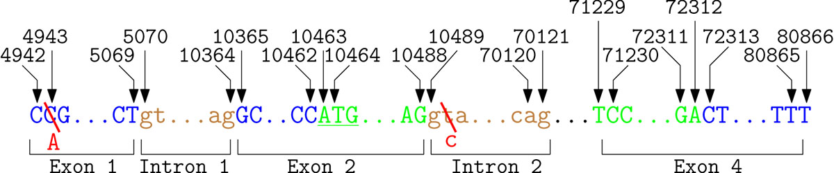 https://static-content.springer.com/image/art%3A10.1186%2F1471-2105-12-S4-S4/MediaObjects/12859_2011_Article_4614_Fig4_HTML.jpg