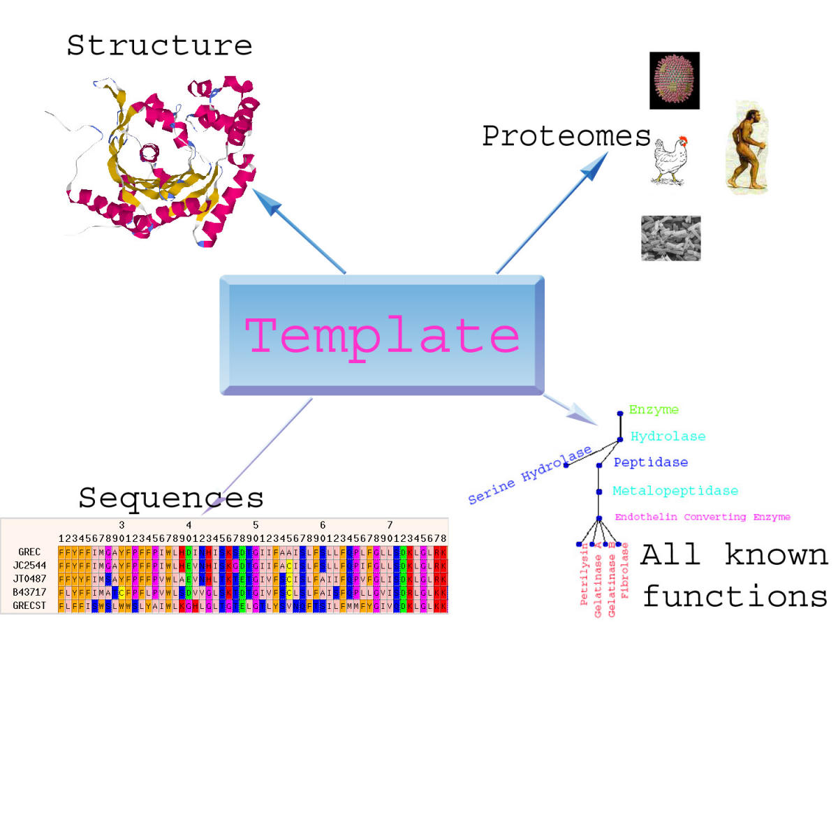https://static-content.springer.com/image/art%3A10.1186%2F1471-2105-4-34/MediaObjects/12859_2003_Article_84_Fig1_HTML.jpg