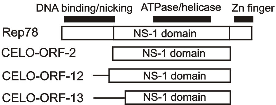 https://static-content.springer.com/image/art%3A10.1186%2F1471-2105-4-55/MediaObjects/12859_2003_Article_105_Fig4_HTML.jpg