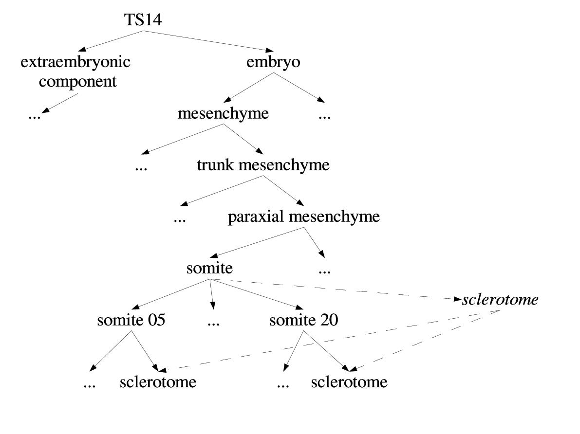 https://static-content.springer.com/image/art%3A10.1186%2F1471-2105-5-184/MediaObjects/12859_2003_Article_300_Fig2_HTML.jpg