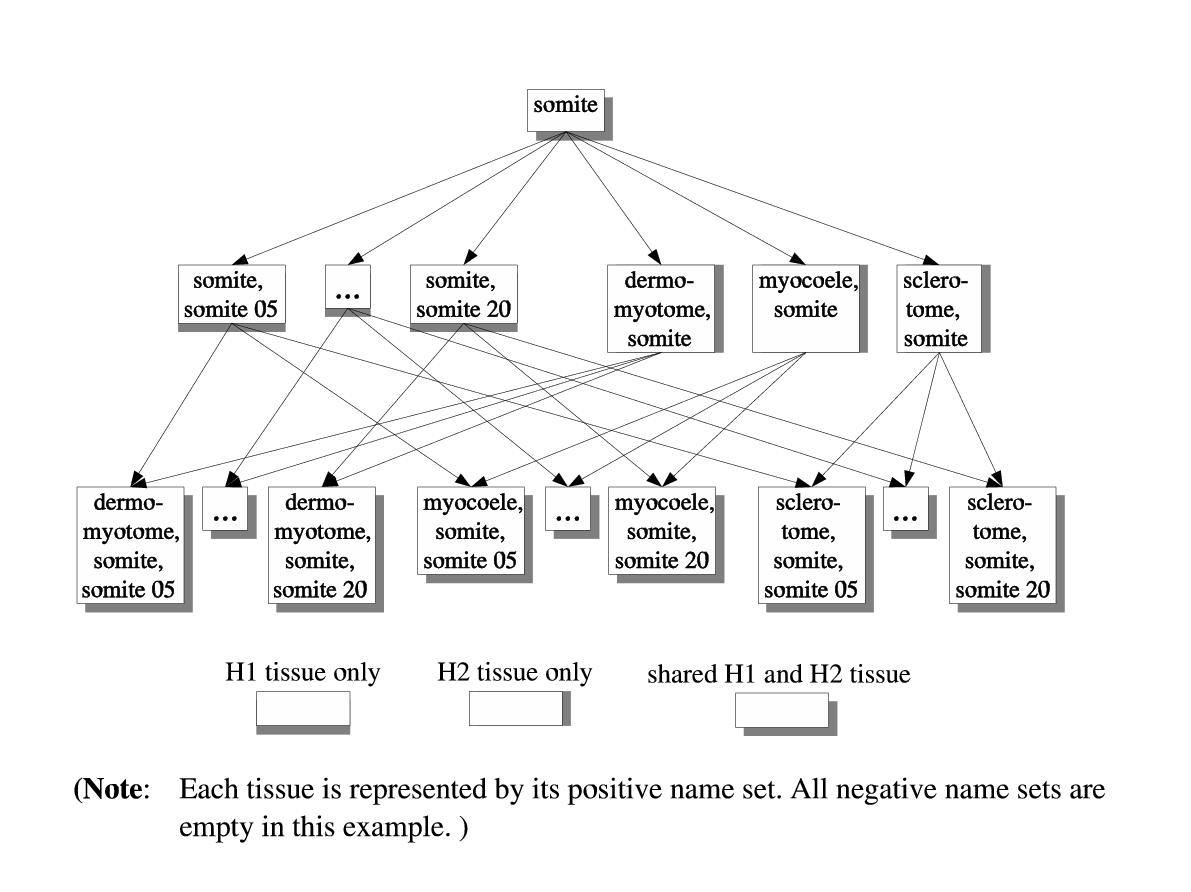 https://static-content.springer.com/image/art%3A10.1186%2F1471-2105-5-184/MediaObjects/12859_2003_Article_300_Fig5_HTML.jpg