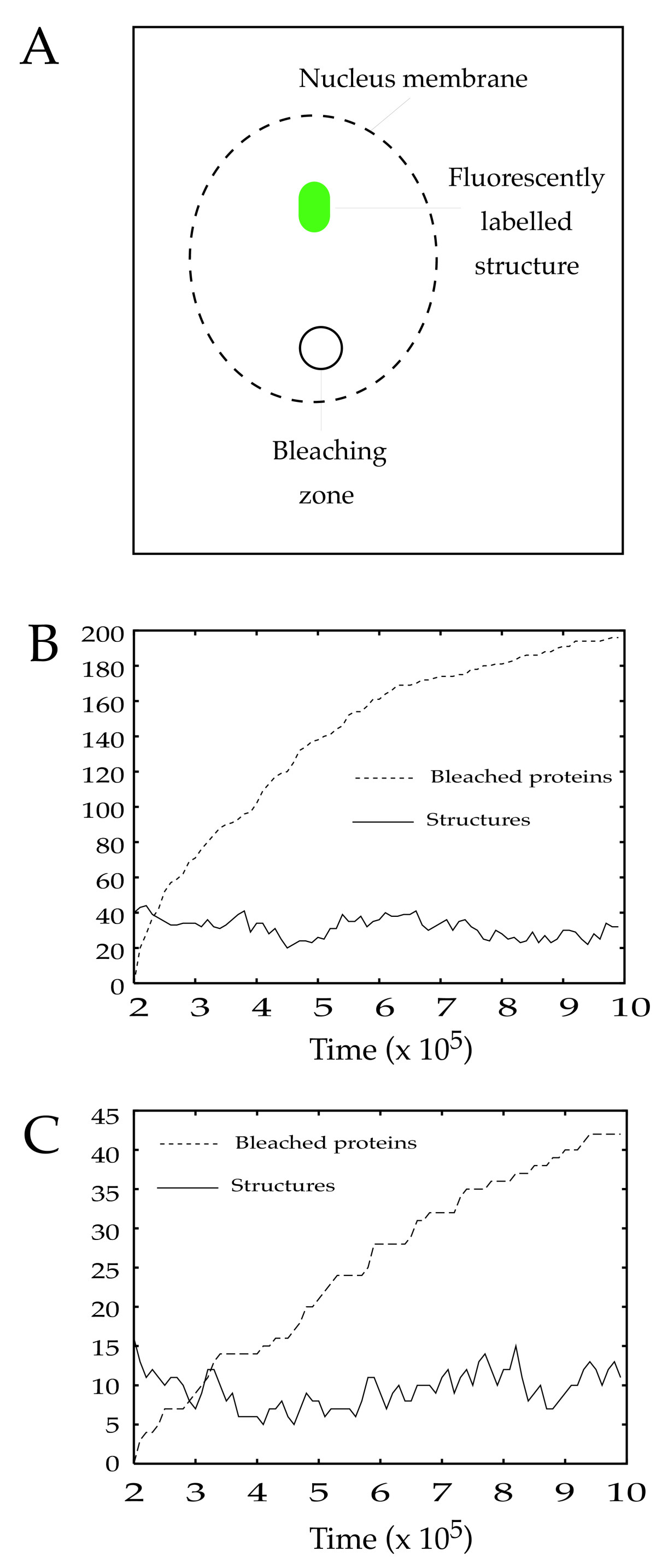 https://static-content.springer.com/image/art%3A10.1186%2F1471-2105-6-228/MediaObjects/12859_2005_Article_553_Fig5_HTML.jpg