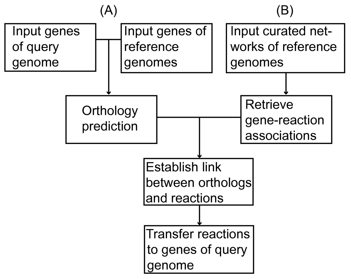 https://static-content.springer.com/image/art%3A10.1186%2F1471-2105-7-296/MediaObjects/12859_2006_Article_1035_Fig1_HTML.jpg