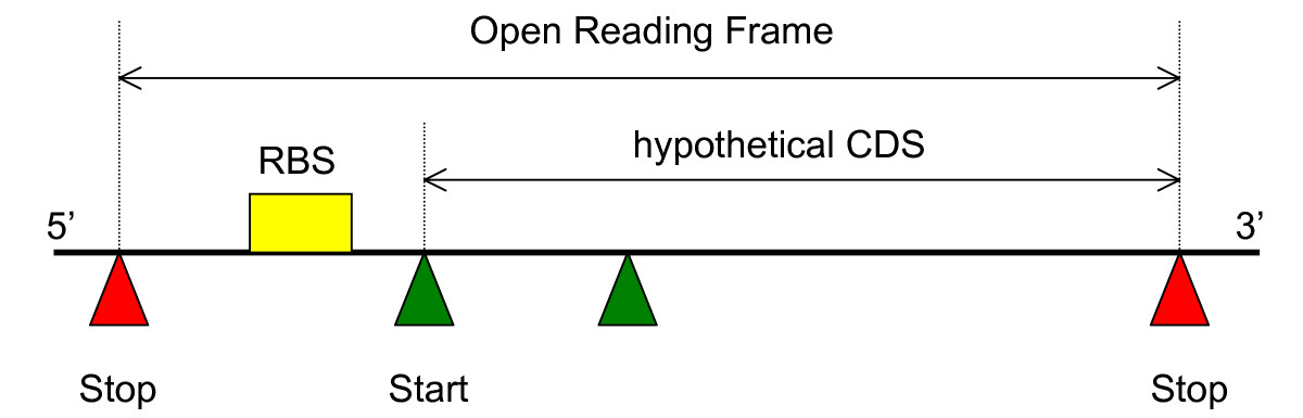 https://static-content.springer.com/image/art%3A10.1186%2F1471-2105-7-450/MediaObjects/12859_2006_Article_1189_Fig2_HTML.jpg