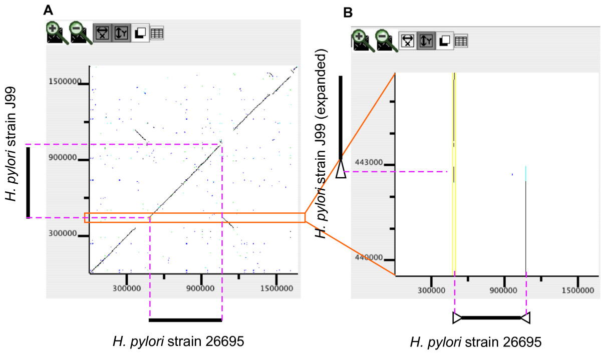 https://static-content.springer.com/image/art%3A10.1186%2F1471-2105-7-472/MediaObjects/12859_2006_Article_1211_Fig6_HTML.jpg