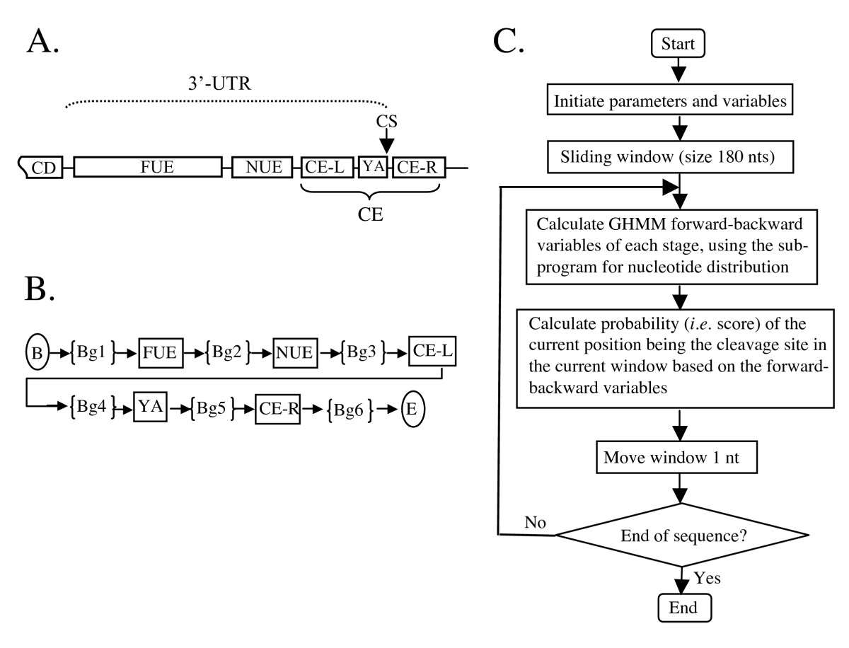https://static-content.springer.com/image/art%3A10.1186%2F1471-2105-8-43/MediaObjects/12859_2006_Article_1415_Fig6_HTML.jpg