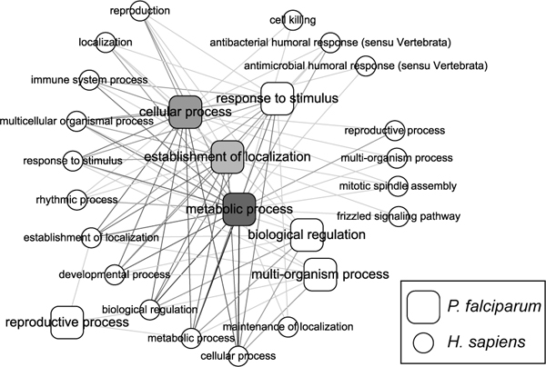 https://static-content.springer.com/image/art%3A10.1186%2F1471-2105-9-S12-S11/MediaObjects/12859_2008_Article_2716_Fig1_HTML.jpg