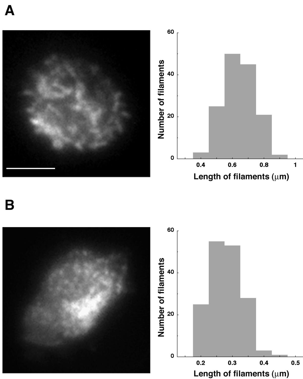 https://static-content.springer.com/image/art%3A10.1186%2F1471-2121-3-19/MediaObjects/12860_2002_Article_48_Fig6_HTML.jpg