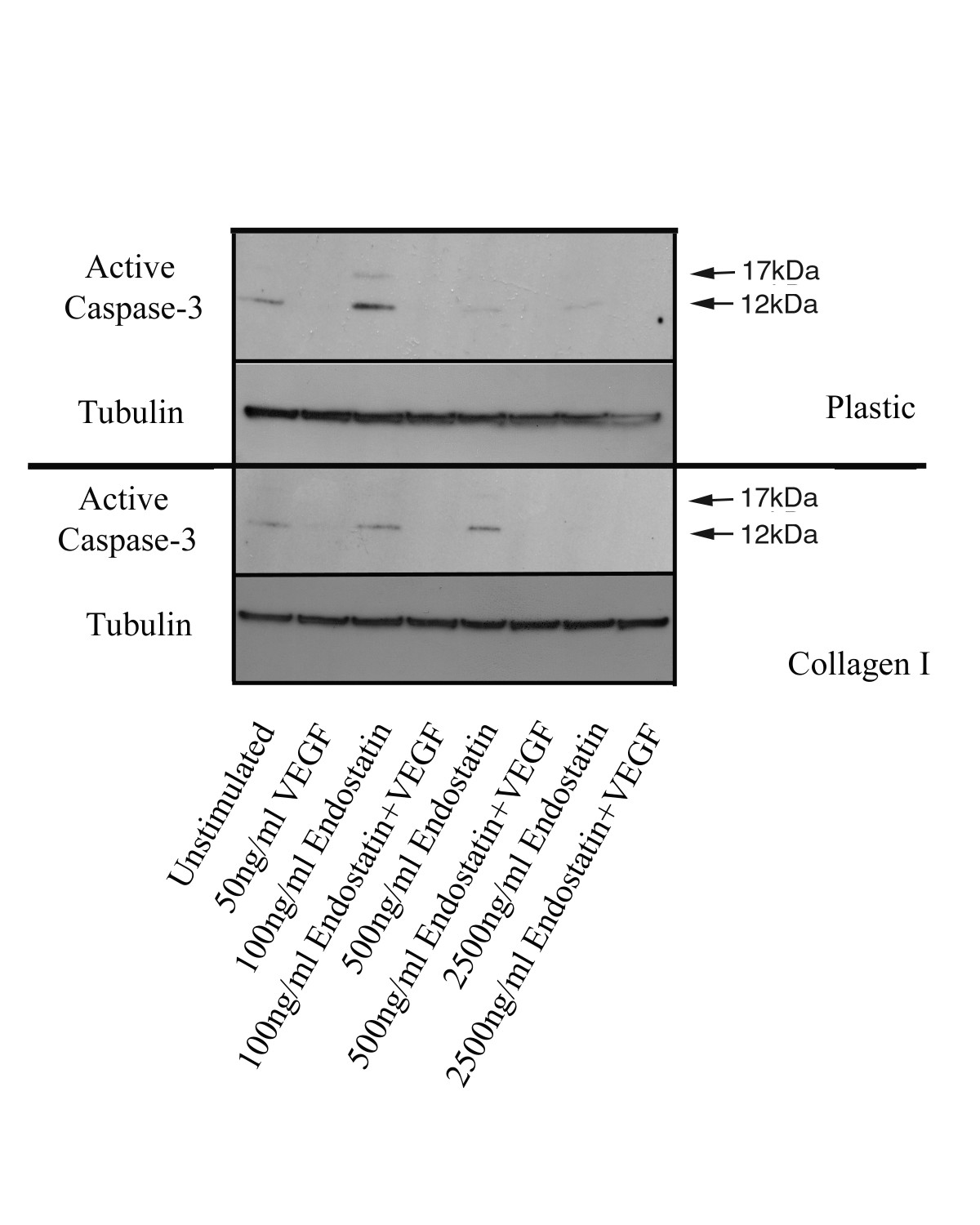 https://static-content.springer.com/image/art%3A10.1186%2F1471-2121-6-38/MediaObjects/12860_2004_Article_164_Fig7_HTML.jpg