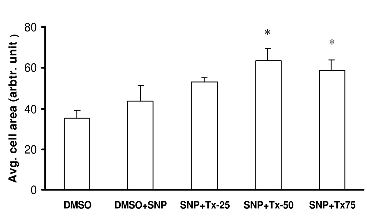 https://static-content.springer.com/image/art%3A10.1186%2F1471-2121-7-17/MediaObjects/12860_2005_Article_190_Fig12_HTML.jpg