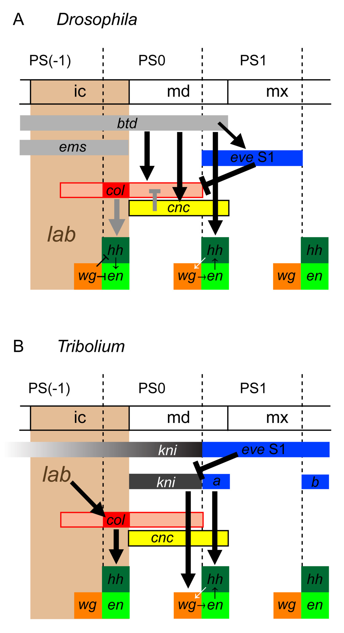 https://static-content.springer.com/image/art%3A10.1186%2F1471-213X-13-25/MediaObjects/12861_2013_Article_736_Fig10_HTML.jpg