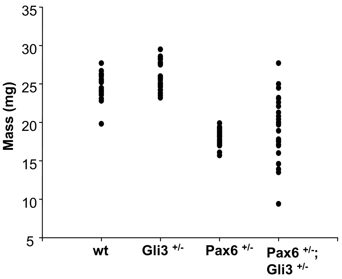 https://static-content.springer.com/image/art%3A10.1186%2F1471-213X-6-46/MediaObjects/12861_2006_Article_125_Fig2_HTML.jpg