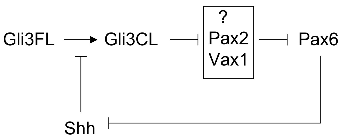https://static-content.springer.com/image/art%3A10.1186%2F1471-213X-6-46/MediaObjects/12861_2006_Article_125_Fig7_HTML.jpg