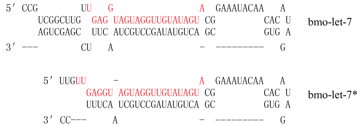 https://static-content.springer.com/image/art%3A10.1186%2F1471-213X-7-88/MediaObjects/12861_2006_Article_230_Fig1_HTML.jpg