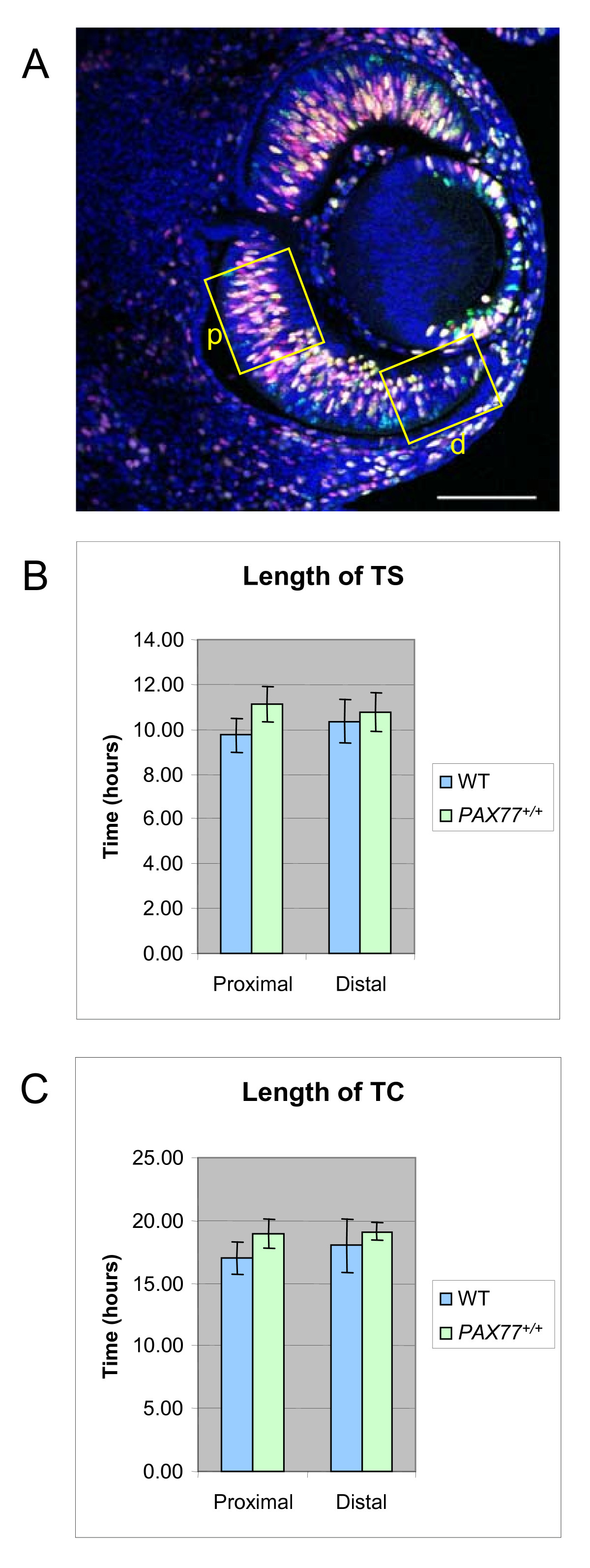 https://static-content.springer.com/image/art%3A10.1186%2F1471-213X-8-59/MediaObjects/12861_2007_Article_343_Fig3_HTML.jpg