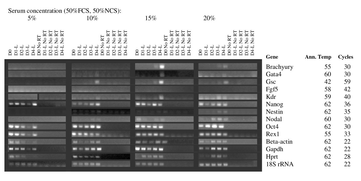 https://static-content.springer.com/image/art%3A10.1186%2F1471-213X-9-5/MediaObjects/12861_2008_Article_409_Fig5_HTML.jpg