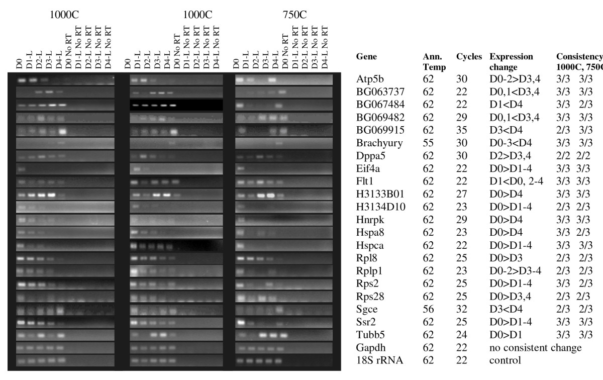 https://static-content.springer.com/image/art%3A10.1186%2F1471-213X-9-5/MediaObjects/12861_2008_Article_409_Fig8_HTML.jpg