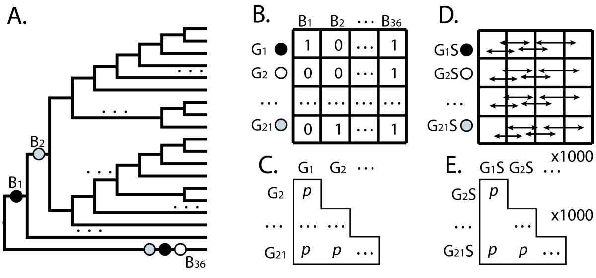 https://static-content.springer.com/image/art%3A10.1186%2F1471-2148-10-123/MediaObjects/12862_2009_Article_1339_Fig4_HTML.jpg