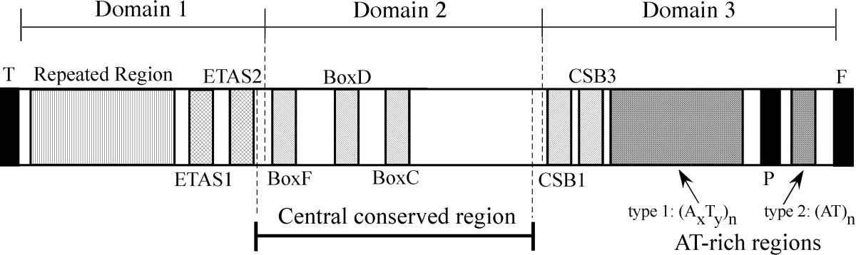 https://static-content.springer.com/image/art%3A10.1186%2F1471-2148-10-141/MediaObjects/12862_2009_Article_1357_Fig2_HTML.jpg