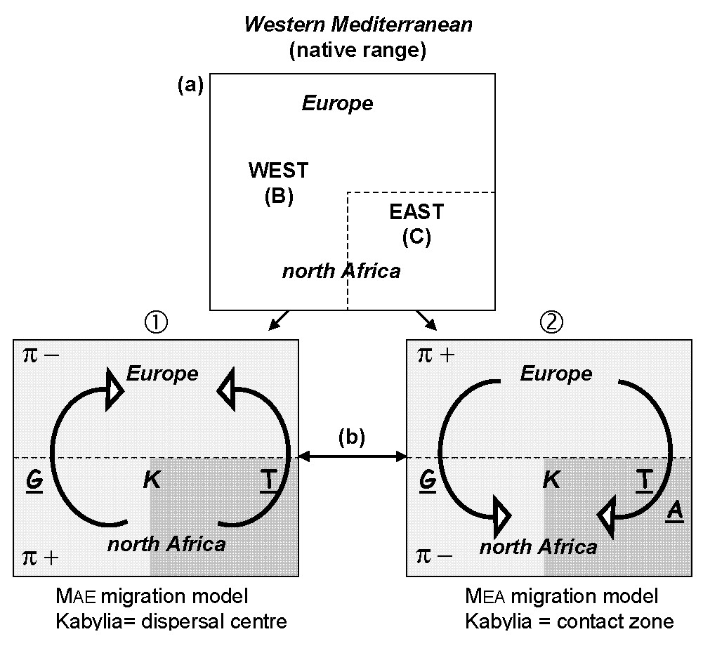 https://static-content.springer.com/image/art%3A10.1186%2F1471-2148-10-18/MediaObjects/12862_2009_Article_1234_Fig2_HTML.jpg