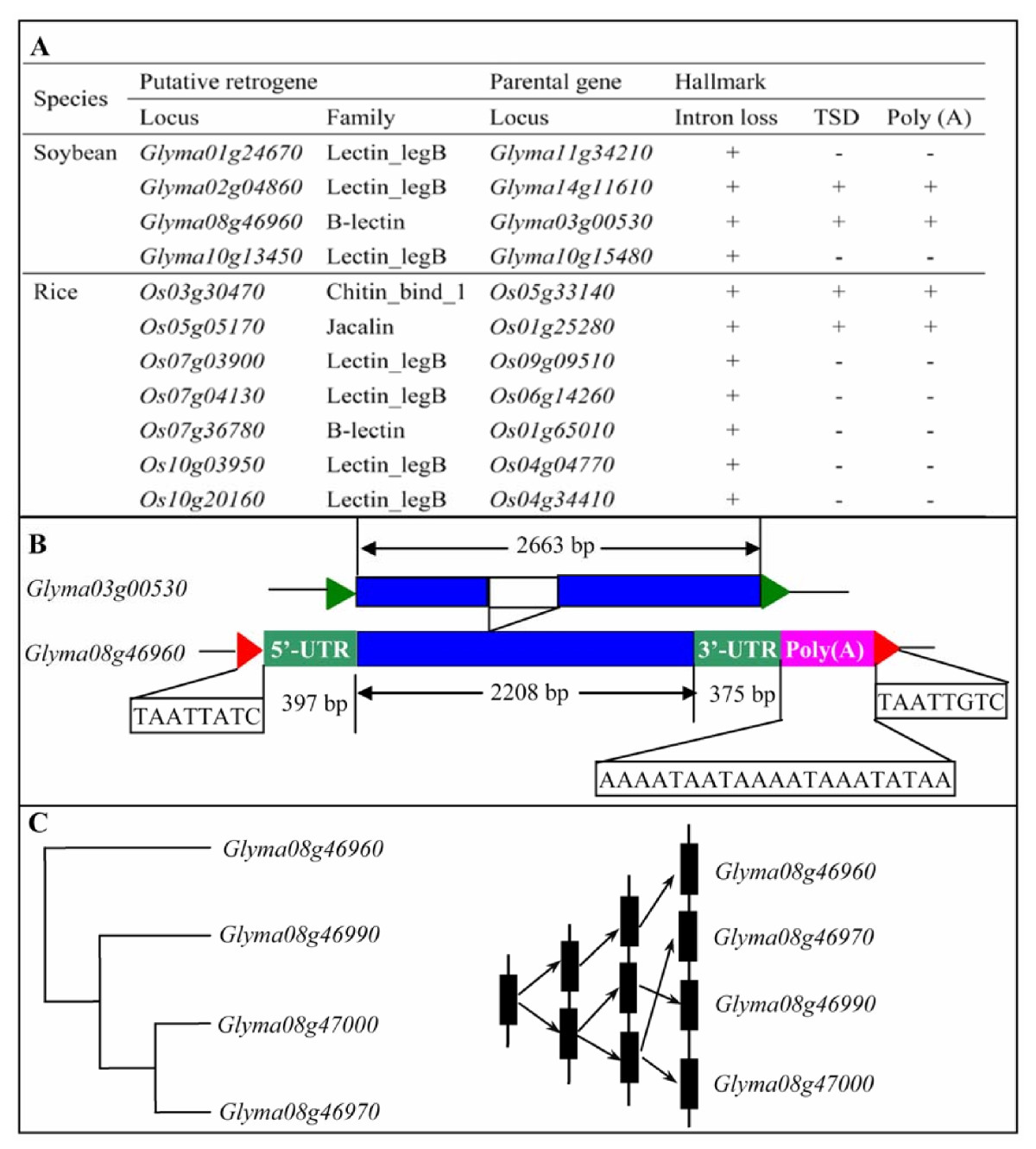https://static-content.springer.com/image/art%3A10.1186%2F1471-2148-10-79/MediaObjects/12862_2009_Article_1295_Fig8_HTML.jpg