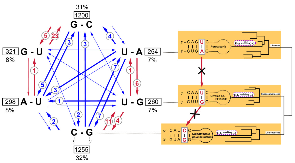 https://static-content.springer.com/image/art%3A10.1186%2F1471-2148-11-262/MediaObjects/12862_2011_Article_1869_Fig7_HTML.jpg