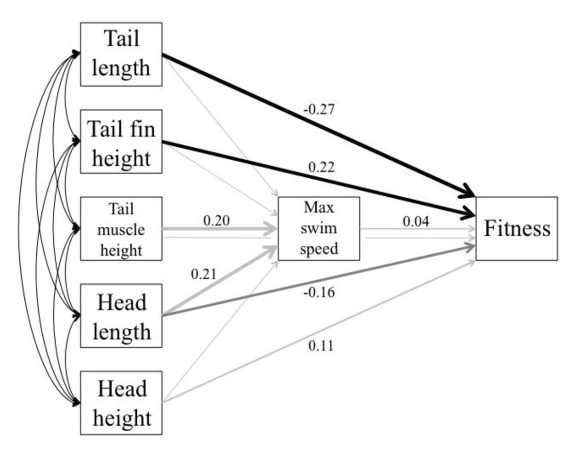 https://static-content.springer.com/image/art%3A10.1186%2F1471-2148-11-353/MediaObjects/12862_2011_Article_1976_Fig4_HTML.jpg