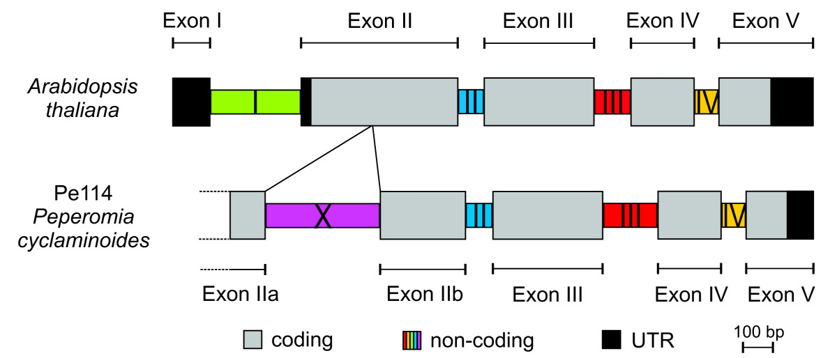 https://static-content.springer.com/image/art%3A10.1186%2F1471-2148-11-357/MediaObjects/12862_2011_Article_1949_Fig1_HTML.jpg