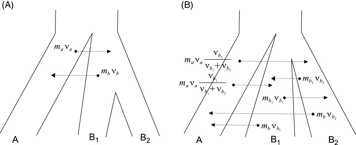 https://static-content.springer.com/image/art%3A10.1186%2F1471-2148-13-44/MediaObjects/12862_2012_Article_2324_Fig3_HTML.jpg