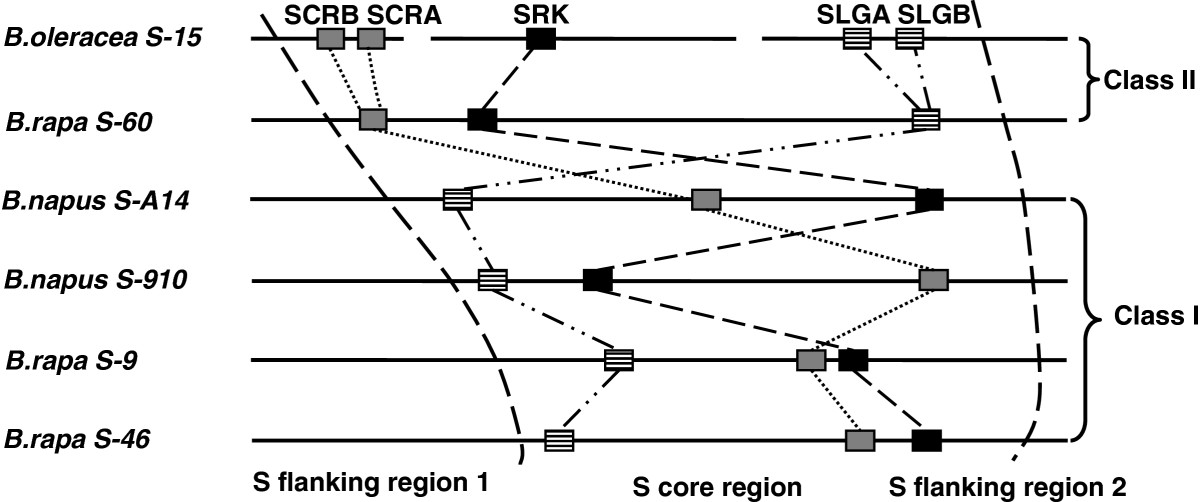 https://static-content.springer.com/image/art%3A10.1186%2F1471-2148-13-69/MediaObjects/12862_2011_Article_2299_Fig7_HTML.jpg