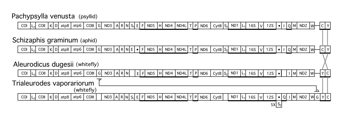 https://static-content.springer.com/image/art%3A10.1186%2F1471-2148-4-25/MediaObjects/12862_2004_Article_85_Fig2_HTML.jpg