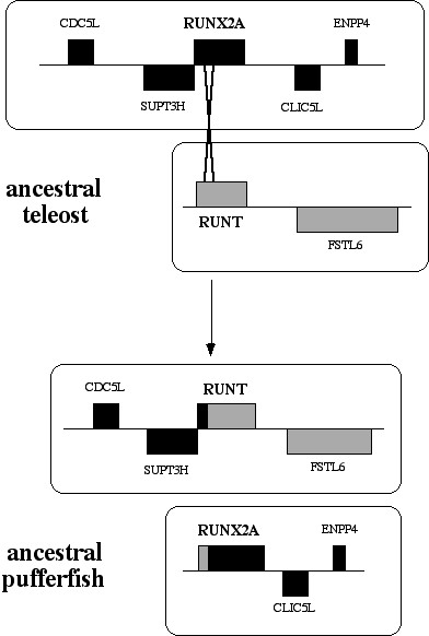 https://static-content.springer.com/image/art%3A10.1186%2F1471-2148-4-43/MediaObjects/12862_2004_Article_103_Fig8_HTML.jpg