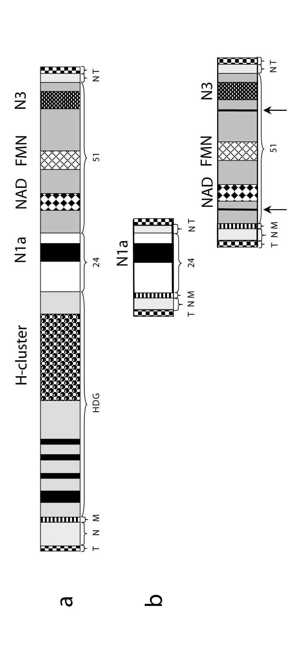 https://static-content.springer.com/image/art%3A10.1186%2F1471-2148-7-230/MediaObjects/12862_2007_Article_521_Fig1_HTML.jpg