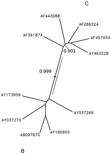 https://static-content.springer.com/image/art%3A10.1186%2F1471-2148-7-S1-S10/MediaObjects/12862_2007_Article_550_Fig6_HTML.jpg
