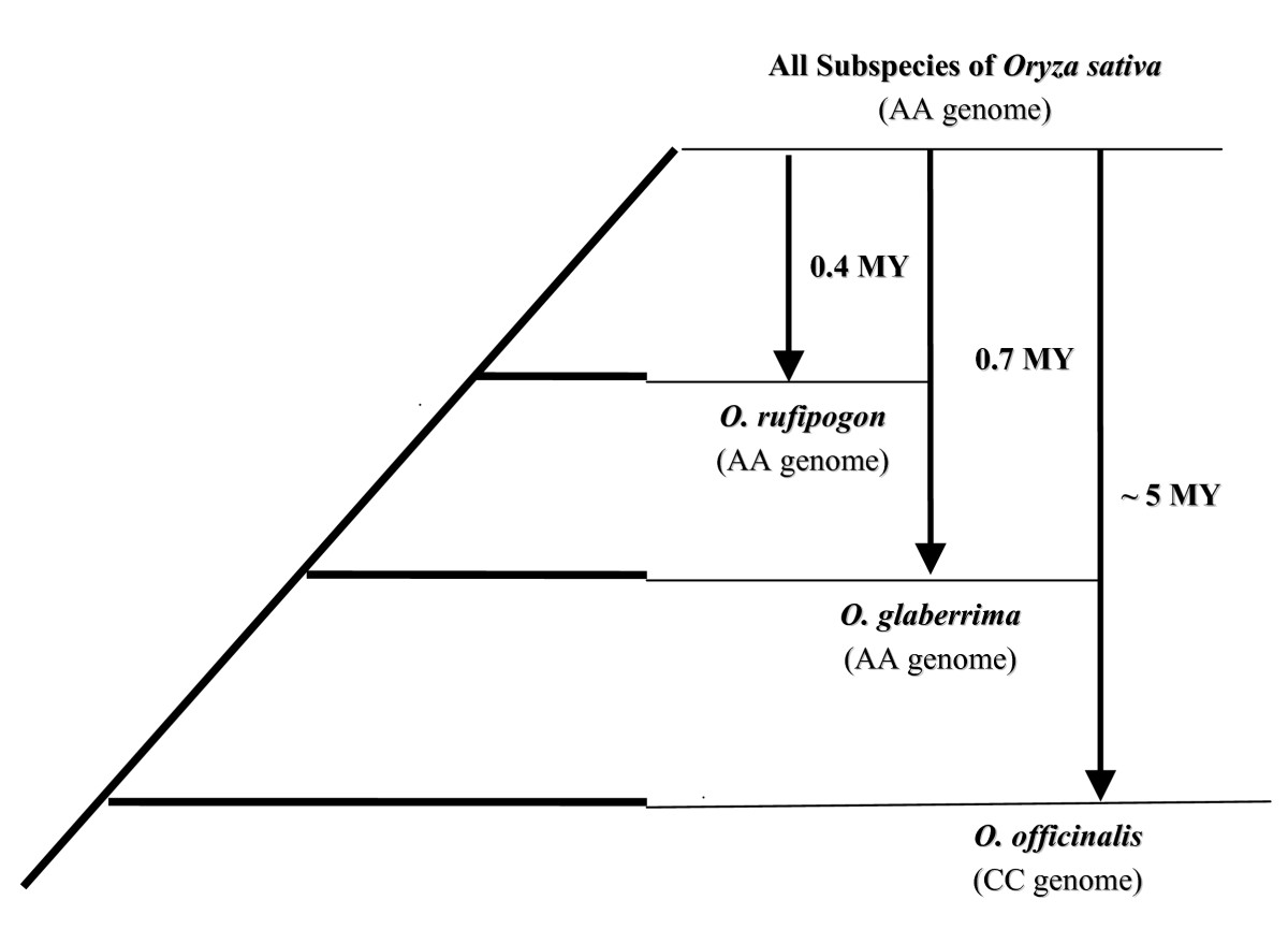 https://static-content.springer.com/image/art%3A10.1186%2F1471-2148-8-11/MediaObjects/12862_2006_Article_580_Fig1_HTML.jpg
