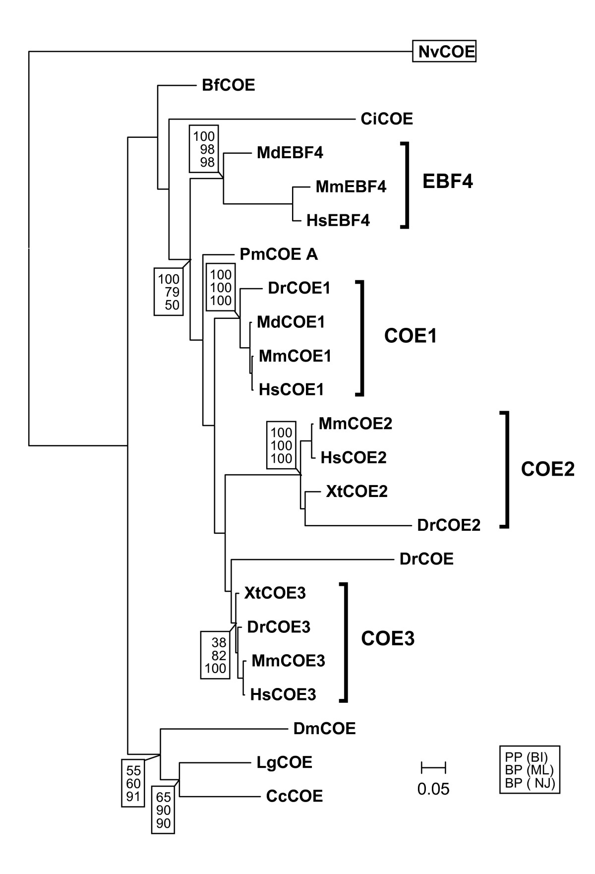 https://static-content.springer.com/image/art%3A10.1186%2F1471-2148-8-131/MediaObjects/12862_2008_Article_700_Fig1_HTML.jpg
