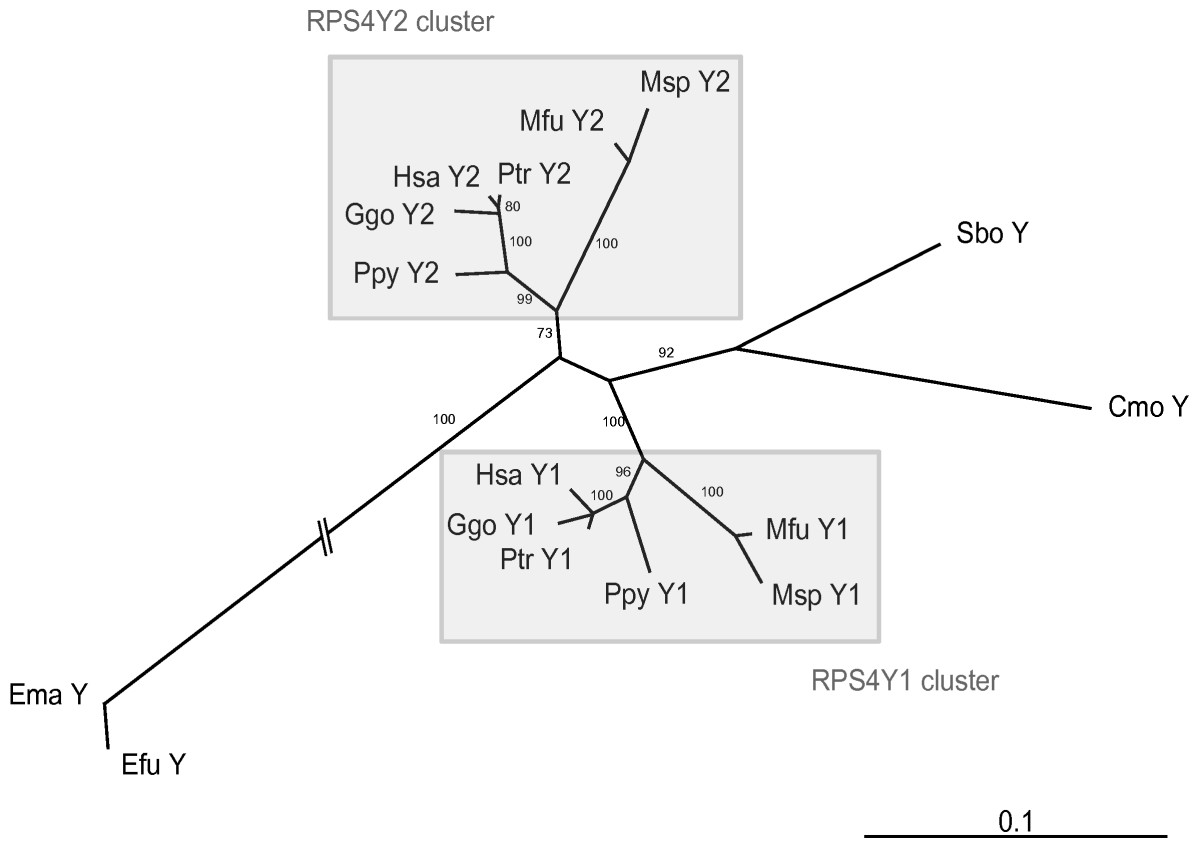 https://static-content.springer.com/image/art%3A10.1186%2F1471-2148-8-142/MediaObjects/12862_2007_Article_711_Fig2_HTML.jpg