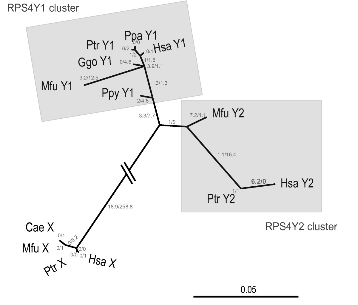 https://static-content.springer.com/image/art%3A10.1186%2F1471-2148-8-142/MediaObjects/12862_2007_Article_711_Fig4_HTML.jpg