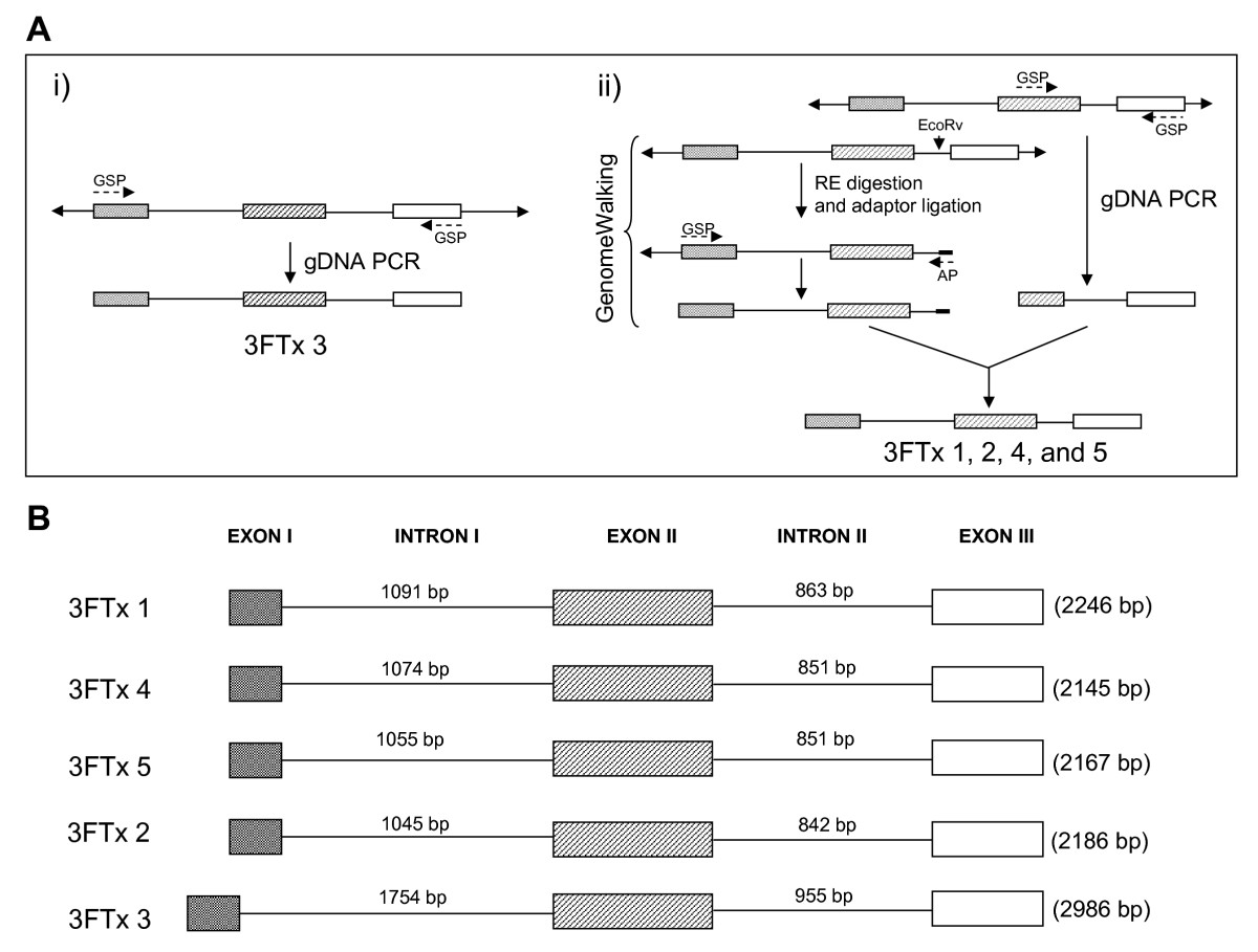 https://static-content.springer.com/image/art%3A10.1186%2F1471-2148-8-196/MediaObjects/12862_2008_Article_765_Fig2_HTML.jpg