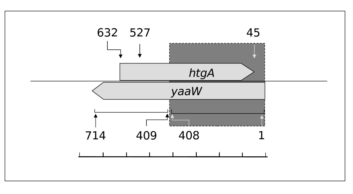 https://static-content.springer.com/image/art%3A10.1186%2F1471-2148-8-31/MediaObjects/12862_2007_Article_600_Fig1_HTML.jpg