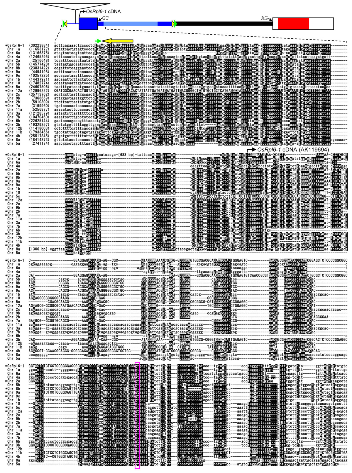 https://static-content.springer.com/image/art%3A10.1186%2F1471-2148-8-314/MediaObjects/12862_2008_Article_883_Fig4_HTML.jpg