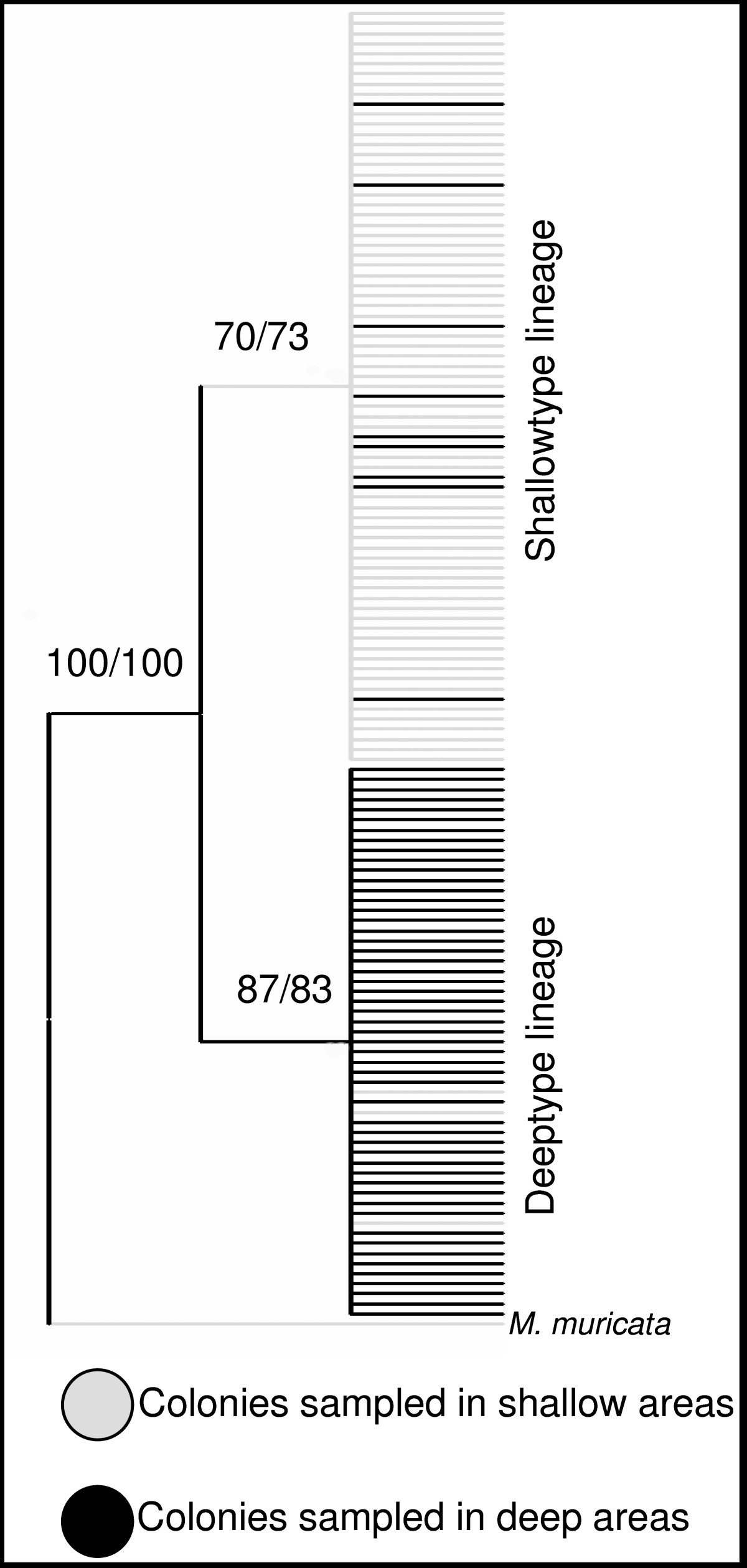 https://static-content.springer.com/image/art%3A10.1186%2F1471-2148-8-47/MediaObjects/12862_2007_Article_616_Fig6_HTML.jpg
