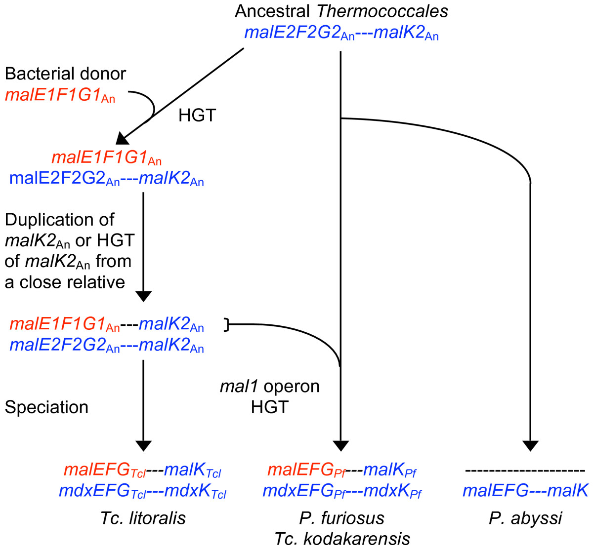 https://static-content.springer.com/image/art%3A10.1186%2F1471-2148-8-7/MediaObjects/12862_2007_Article_576_Fig1_HTML.jpg