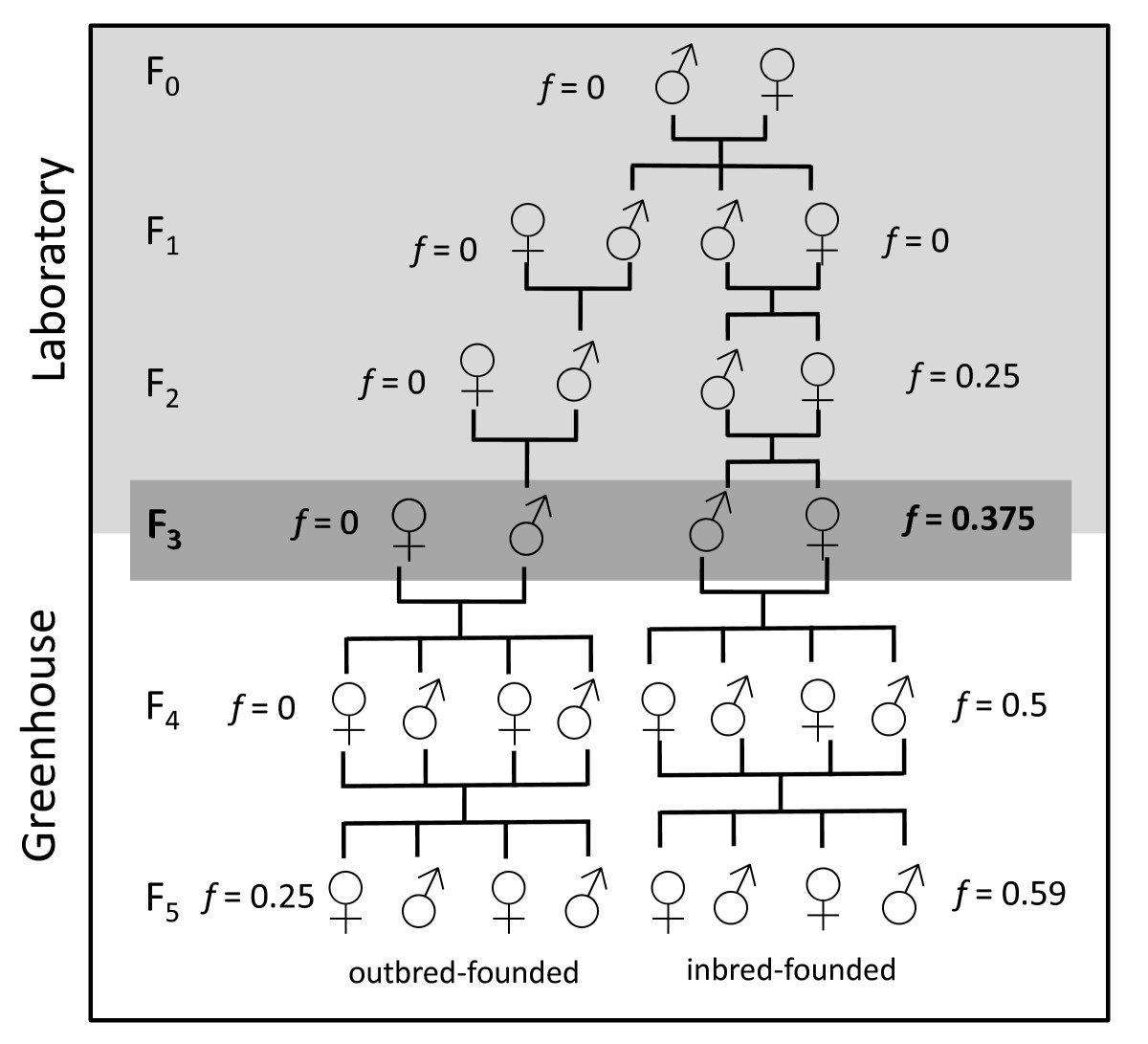 https://static-content.springer.com/image/art%3A10.1186%2F1471-2148-9-289/MediaObjects/12862_2009_Article_1203_Fig1_HTML.jpg
