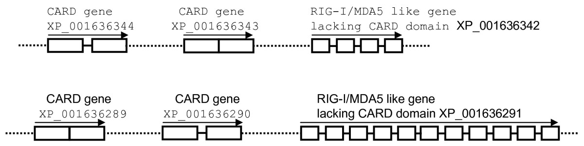 https://static-content.springer.com/image/art%3A10.1186%2F1471-2148-9-85/MediaObjects/12862_2008_Article_999_Fig2_HTML.jpg