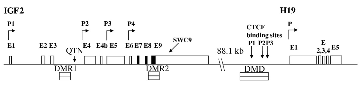 https://static-content.springer.com/image/art%3A10.1186%2F1471-2156-12-47/MediaObjects/12863_2011_Article_902_Fig1_HTML.jpg