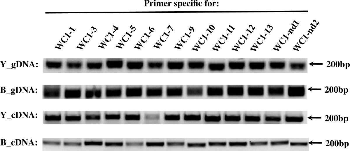 https://static-content.springer.com/image/art%3A10.1186%2F1471-2156-13-86/MediaObjects/12863_2011_Article_1048_Fig8_HTML.jpg