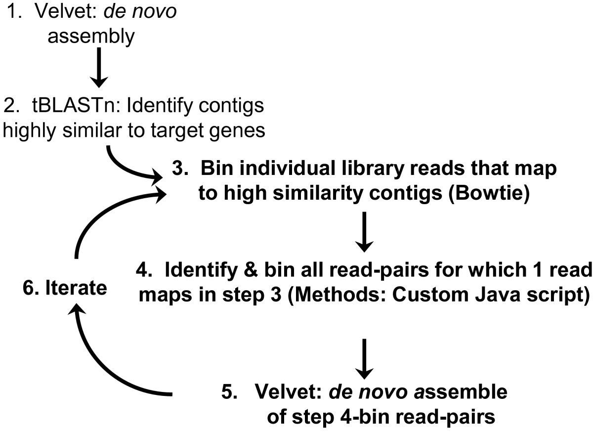 https://static-content.springer.com/image/art%3A10.1186%2F1471-2156-14-55/MediaObjects/12863_2012_Article_1121_Fig1_HTML.jpg