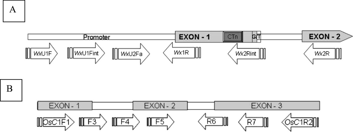 https://static-content.springer.com/image/art%3A10.1186%2F1471-2156-15-71/MediaObjects/12863_2013_Article_1262_Fig2_HTML.jpg